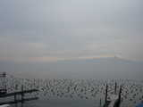 Lausanne, Birds on the Lake on a Winter's Day (24 kbytes) - Click to enlarge